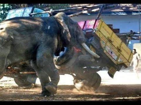 Thechikottukavu Ramachandran attacks