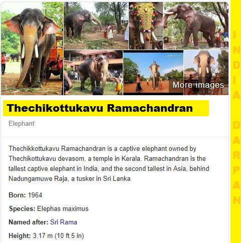 Thechikottukavu Ramachandran The Giant Elephant | Facts, Latest News
