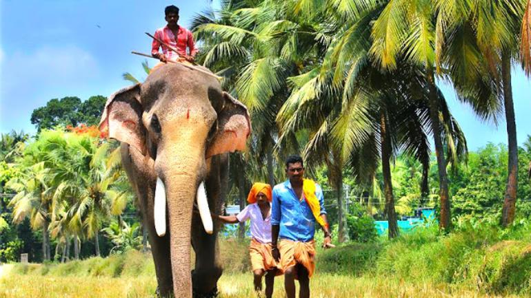 Thechikottukavu Ramachandran Image