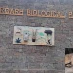 Nahargarh Biological Park Jaipur : Everything You Need to Know