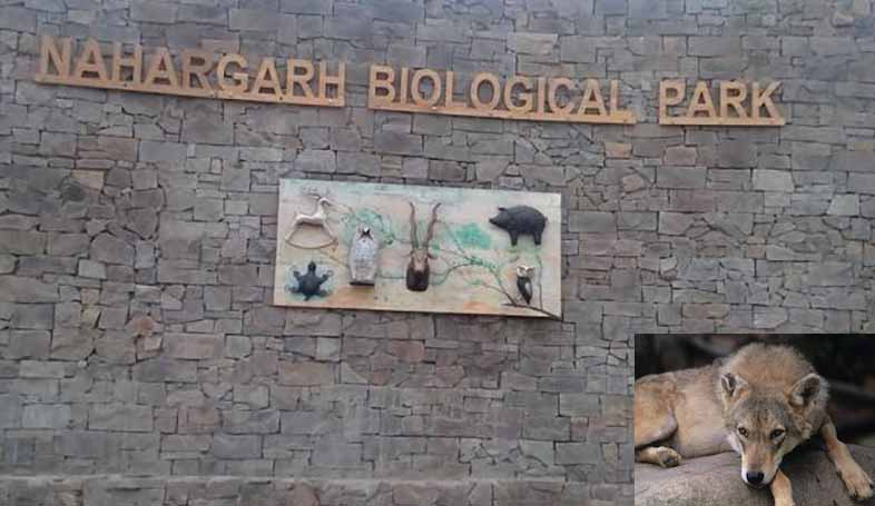 Nahargarh Biological Park in Jaipur